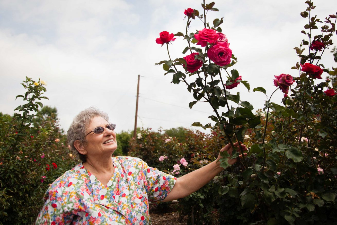 Janet Herbison examines some Kay Frances roses which are hybrids, Tuesday, June 14, 2016, in Denton, Texas. Jeff Woo/DRC