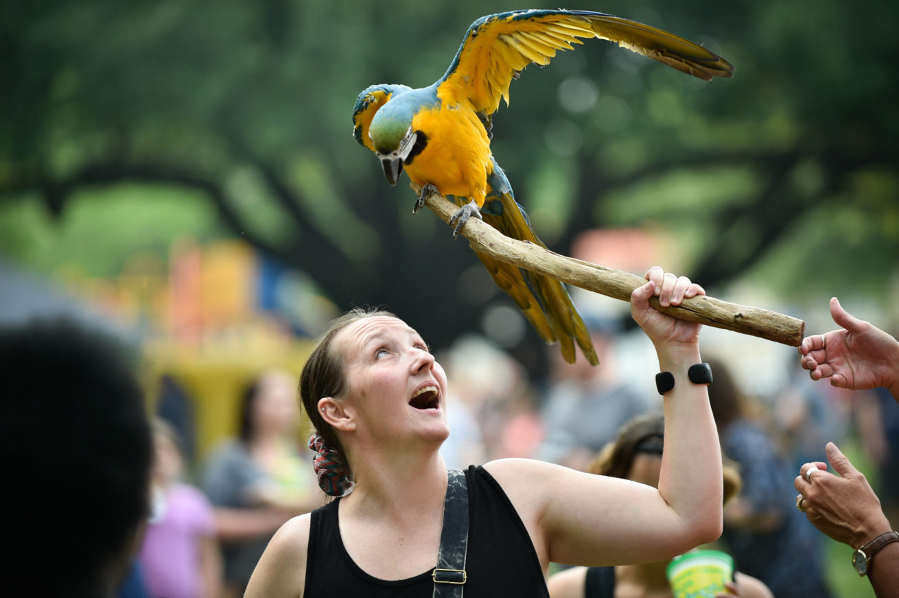 Shavon Dear is greeted by a parrot named Tico during the Denton Arts & Jazz Festival at Quakertown Park. The festival is the biggest event of the year in Denton, began on Friday night. The event continues through Sunday at Quakertown Park.